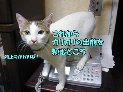 P1040467.jpg
