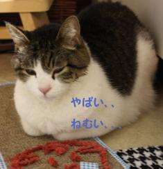 20090507 (3)うとうとのコピー
