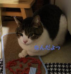 20090507 (2) にらむのコピー