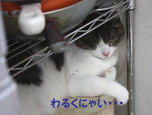 20090510 (9)ストッカー上コピー