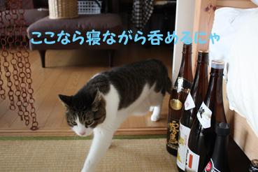 20090521-2 (14)焼酎のビンのコピー