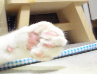 20090521-2 (32)猫の手