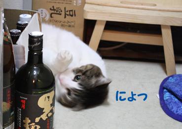 20090514 (6)ぞうりのコピー