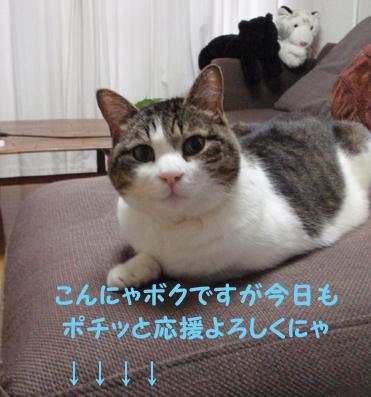 20090528 (14)☆ぽちっとにゃ