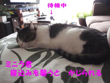 20090616 (13)ねこみ