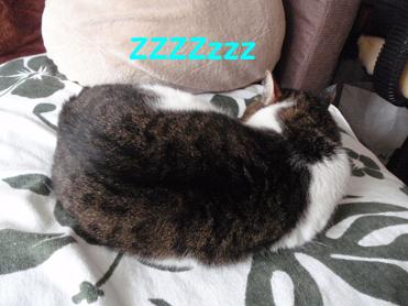 20090530 (24)ZZZ
