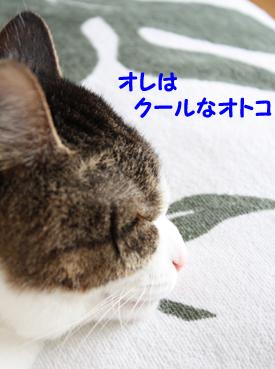 20090612 (21)クールなオトコ