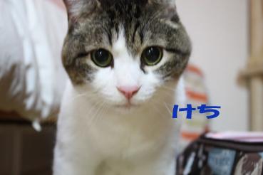 20090702 (61)けち