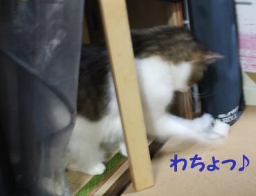 20090630 (43)わちょ