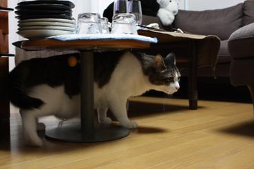 20090727 (53)ミニテーブル