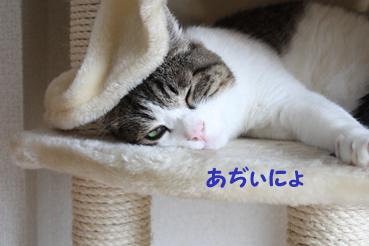 20090803 (45)あぢぃ