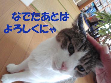 20090813 (5)よろしく