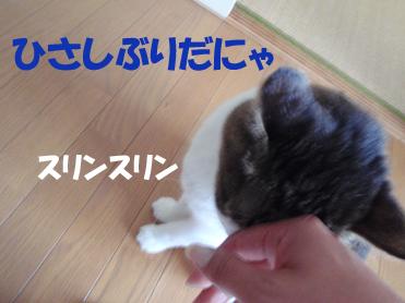 20090813 (3)スリン