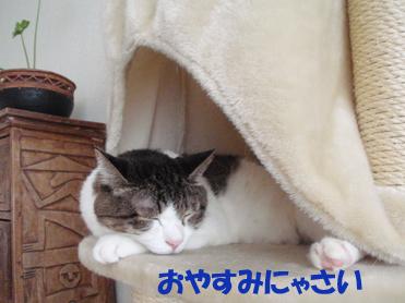 20090813おやすみ