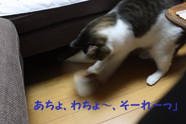 20090819 (47)そーれー