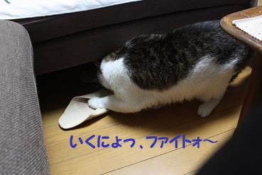 20090819 (46)ファイトォ