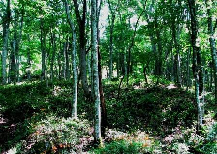 関彌城の森