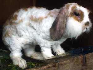 恐怖ウサギ