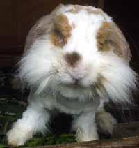 ウサギだってば。