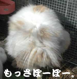 DSC_007011.jpg