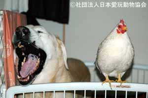著作権:社団法人日本愛玩動物協会