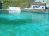 プールの藻