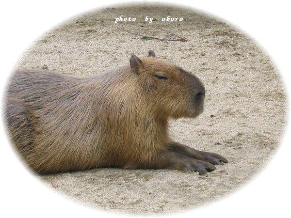 2008 8月22日 動物園 たまにはのんびり~
