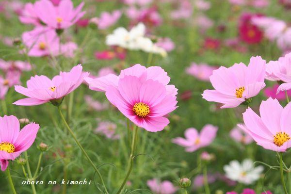 2008 9月14日 萌の里 037