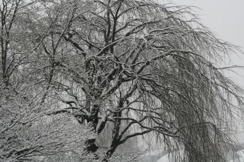 090109雪景色 (6)40