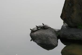 090226猿沢池 (2)80
