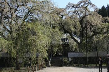 090411青雲寺 (15)35