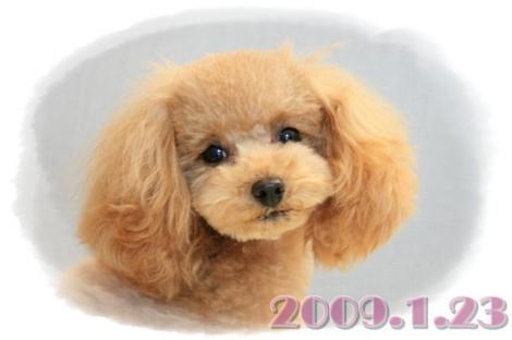 20080123_1178.jpg