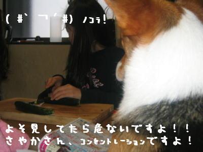 20060414184904.jpg