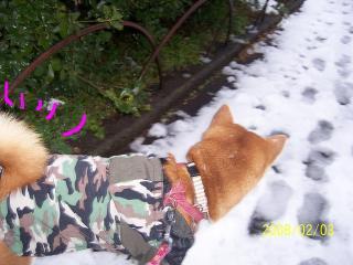 雪つめたい