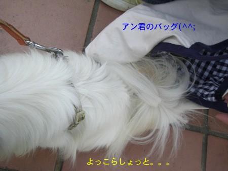 11_20081007190342.jpg