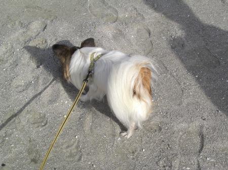 13人工の白い砂浜
