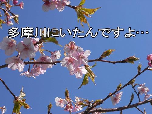 20110316R0014417.jpg