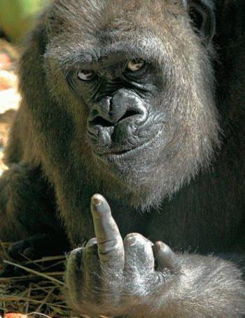 gorillafu.jpg