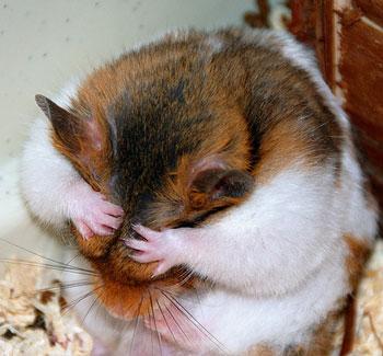 hamstercoversface.jpg