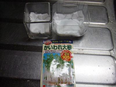 2008_09030037.jpg