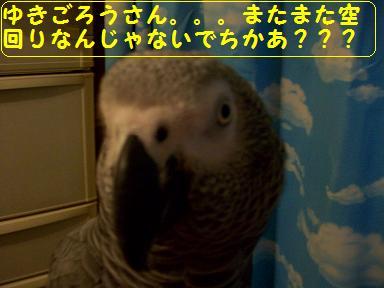100_0600.jpg