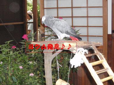 掛川花鳥園5