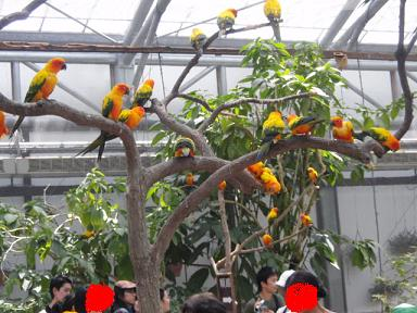 掛川花鳥園6