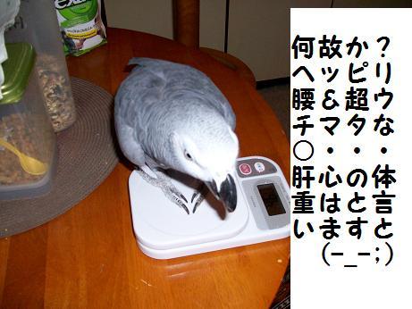 ○体重測定