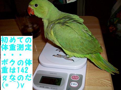ちゃちゃ丸体重測定