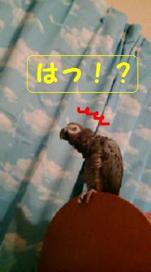 はっ!?○