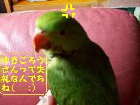 ちゃちゃ丸①