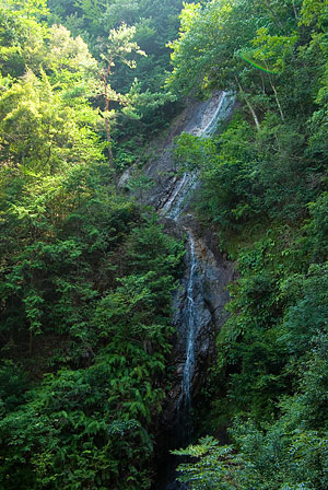 愛知県民の森3-8