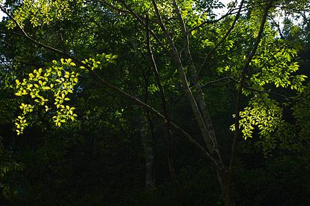 愛知県民の森3-9
