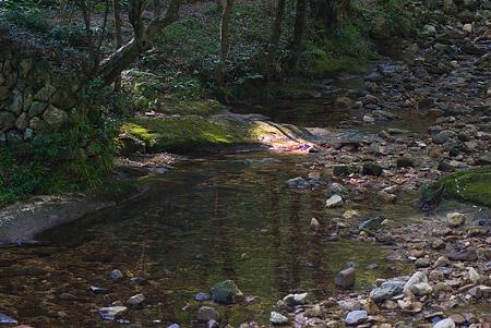 愛知県民の森4-10